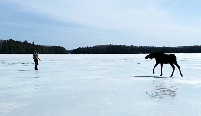 ATCTW040921.moose.1240.jpg