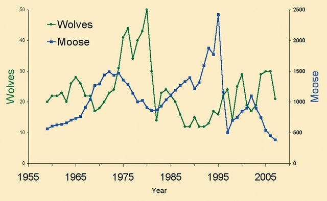 Rolf-Wolf&Moose-Chart.jpg