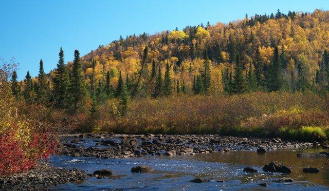 Fall color near Lutsen, Minnesota