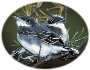 234birdsking