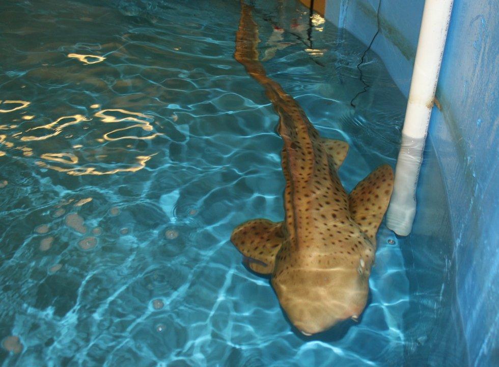 Shipwrecks As Habitat At Great Lakes Aquarium Exhibit