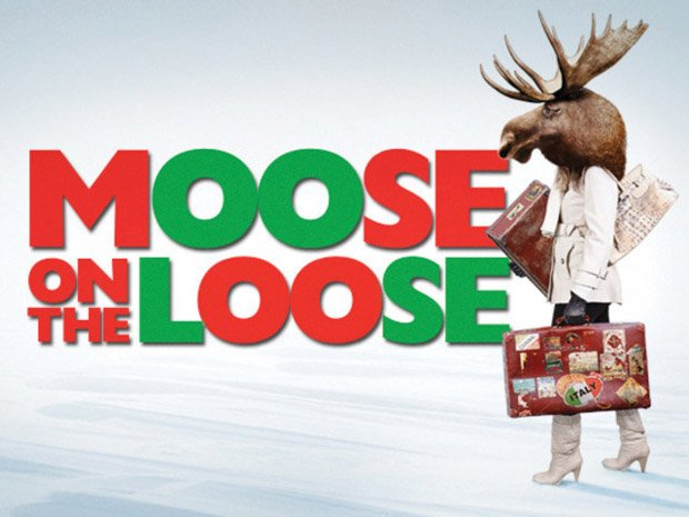 """Moose on the Loose"""