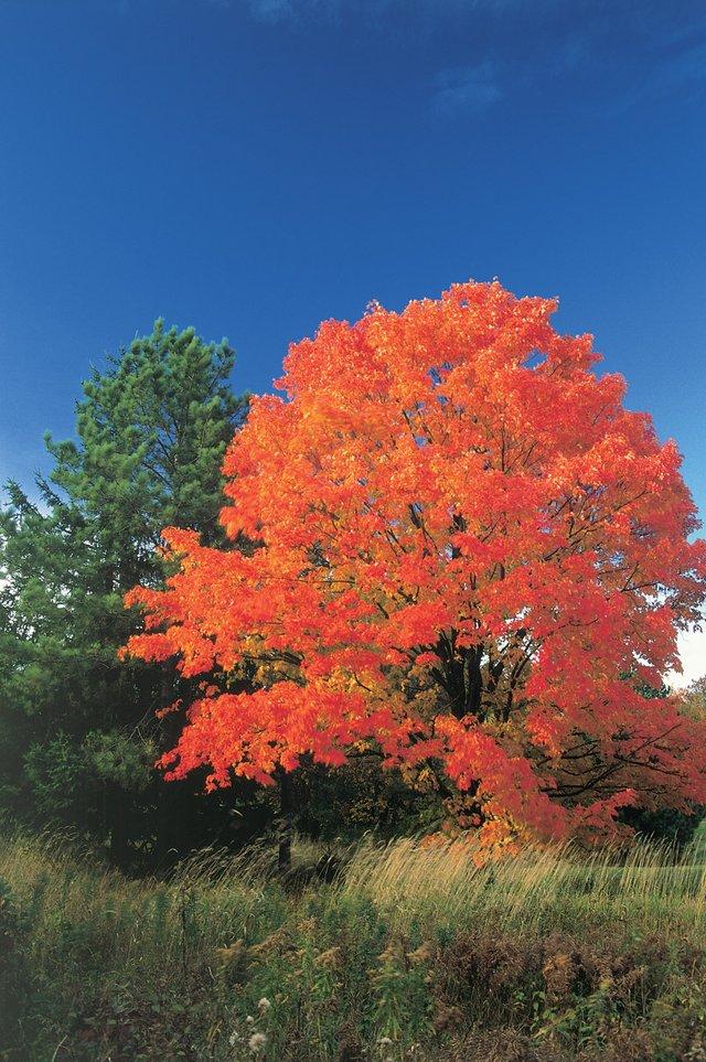 Fabulous Fall Hikes