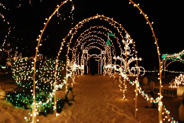 """Marcia Hales Christmas Lights 2020 Follow the Cats: An Excerpt from """"Spirit of the Lights""""   Lake"""