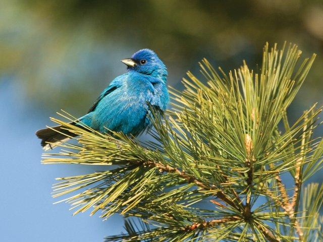 Birding Festivals