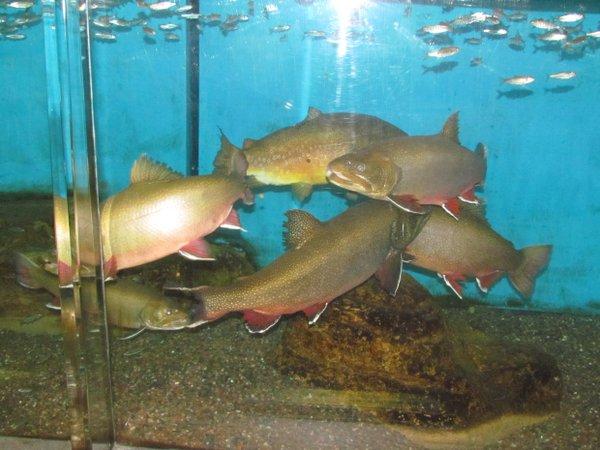Les Voigt State Fish Hatchery