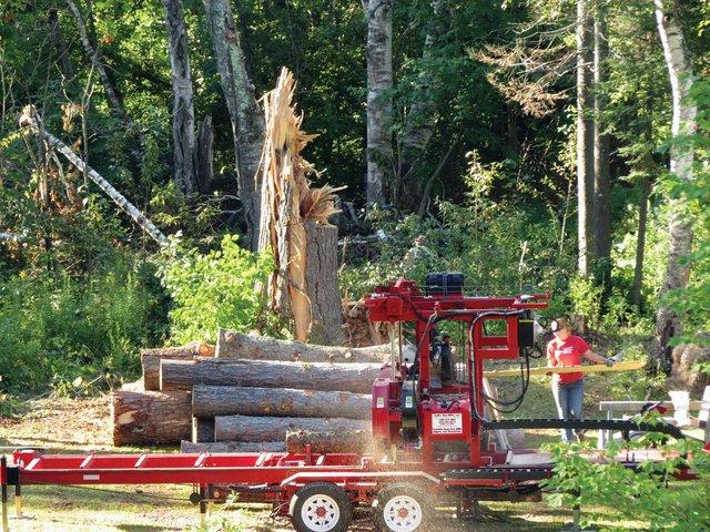 Farewell Pine
