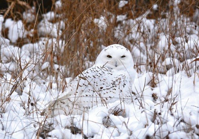 Lake Superior Journal: Everything Will Be Owl Right