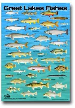 Lake superior 39 s fishes lake superior magazine for Fishing lake superior