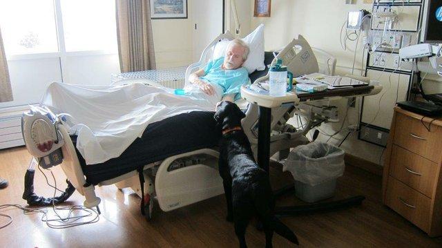 Essentia Health Staff Reunite Patient with Service Dog