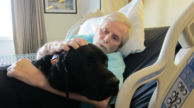 Essentia Health Staff Reunite Patient with Service Dog