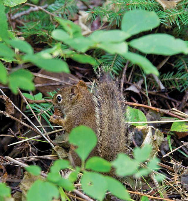 How Did You Get Here? A Naturalist's View of Isle Royale