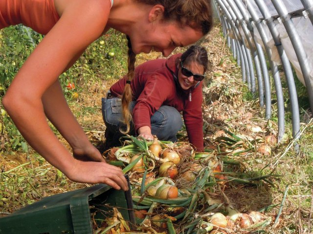 Community Supported Agriculture: Edible Profits for Investors in Our Local Food