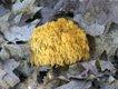 Finding Fabulous Fungi