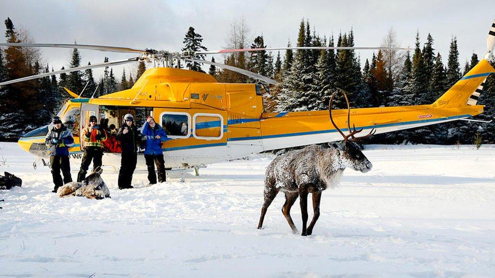 ATCTW.011918.caribou.1240.jpg