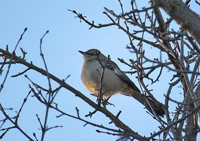 ATCTW122118.Bird.1240.jpg