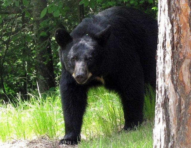 ATCTW050319.bear.1240.jpg