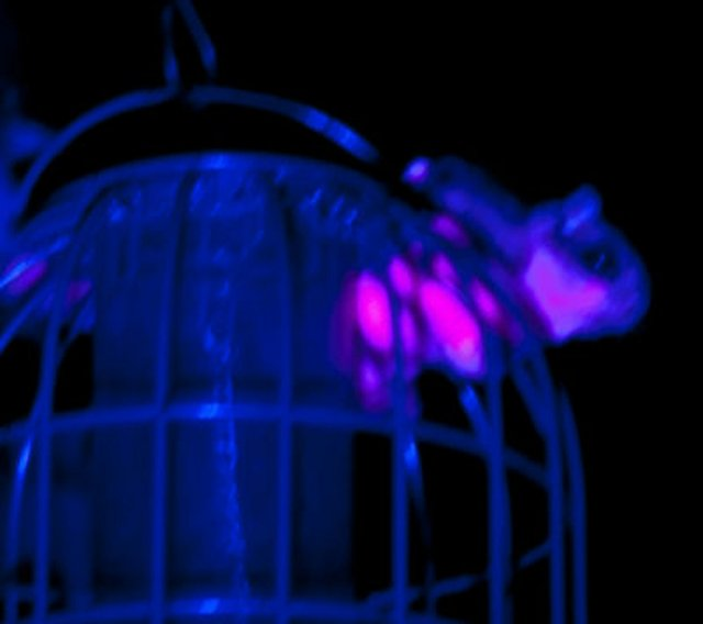 ALCTW051719.pink-explosion.1240.jpg
