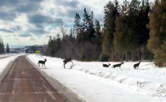 ATCTW021420.deer.1240.jpg